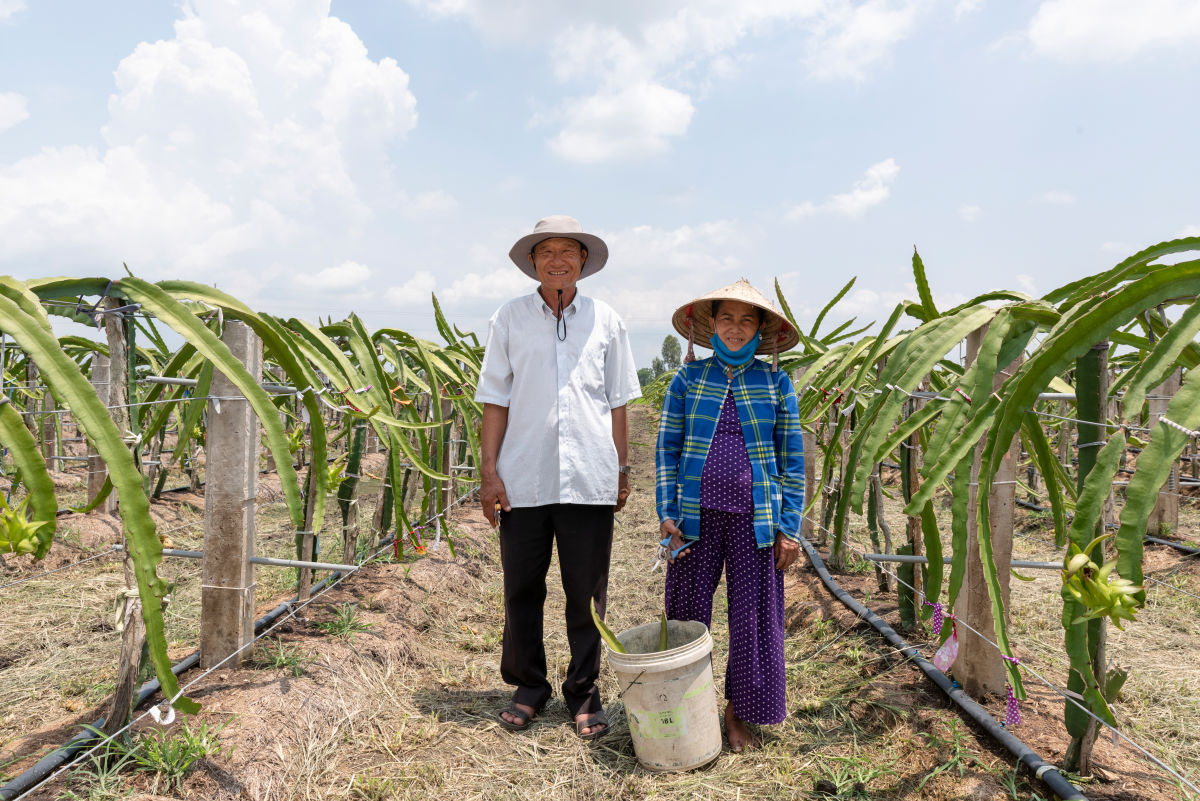 Dragon fruit orchard in Viet Nam