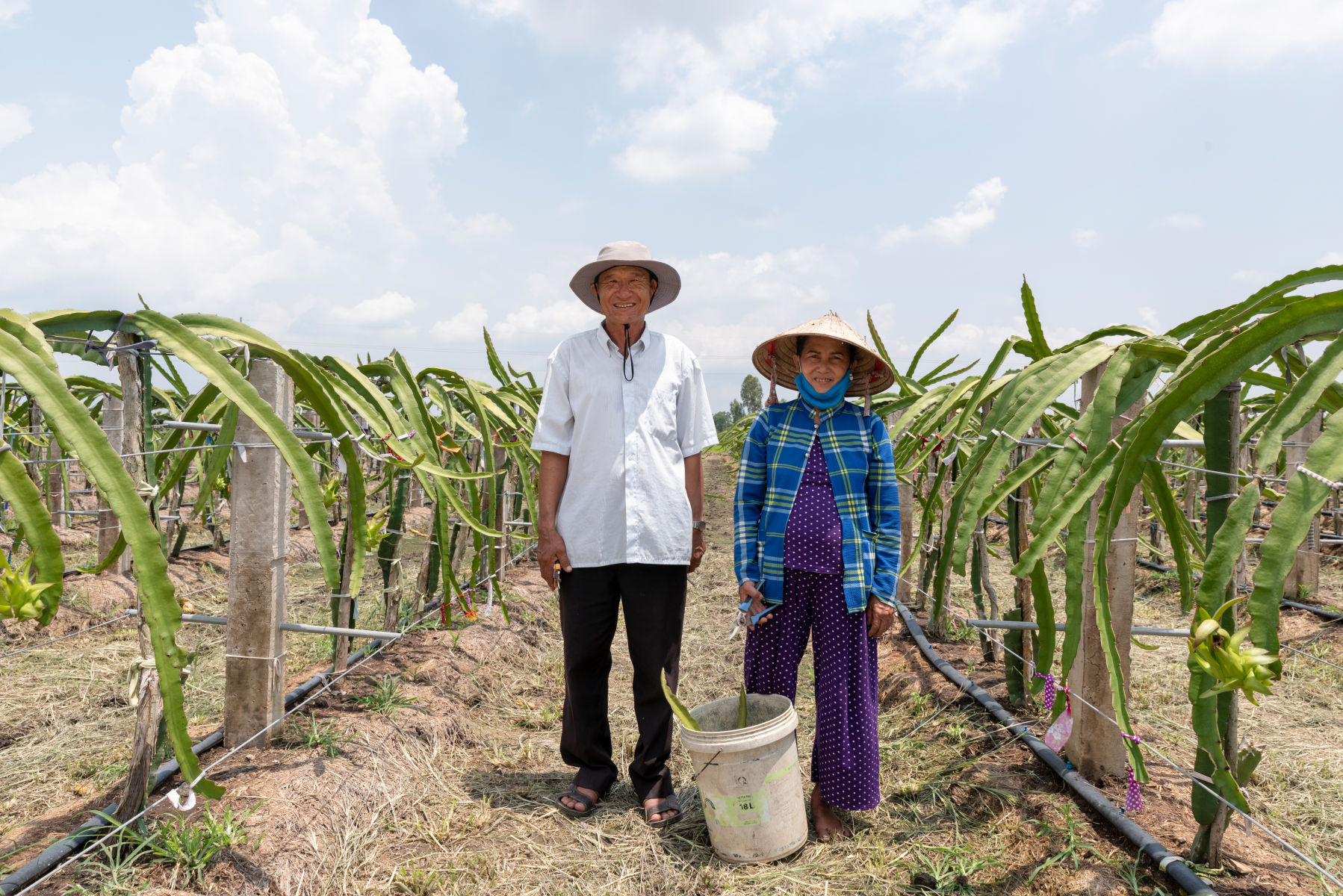 A sustainable dragon fruit industry for Viet Nam
