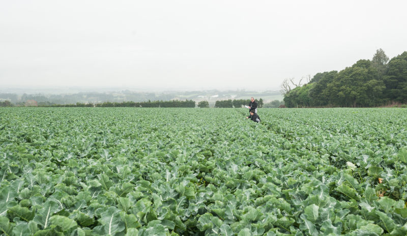 Six legs good? Integrated pest management for arable farms