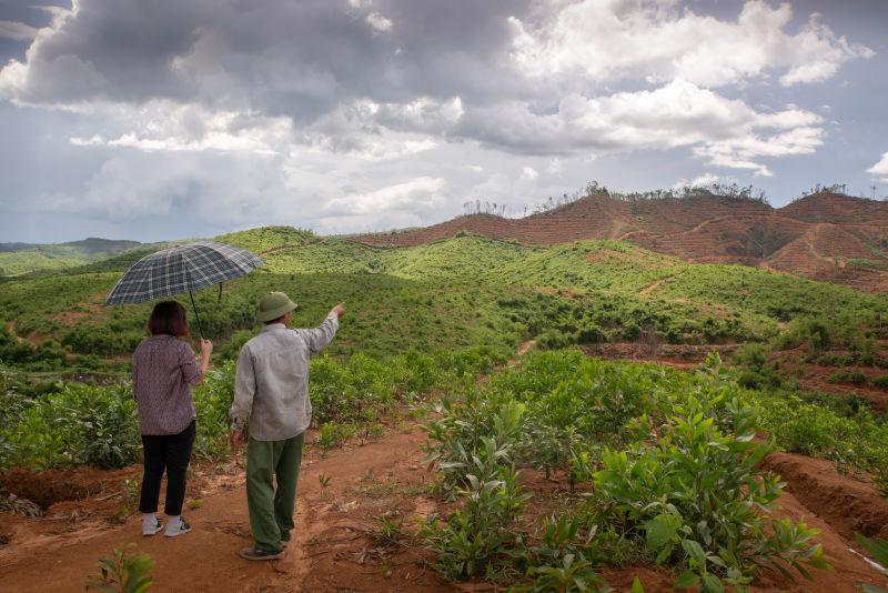 Avocado production in the Dak Nong Province Viet Nam