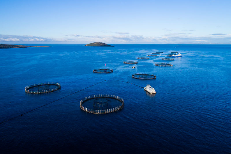Plant & Food Research joins Blue Economy CRC project exploring the use of floating platforms