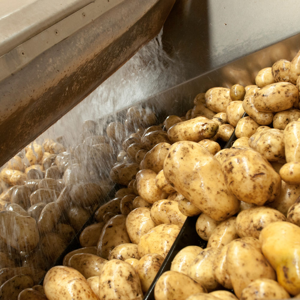 Potatoes being washed
