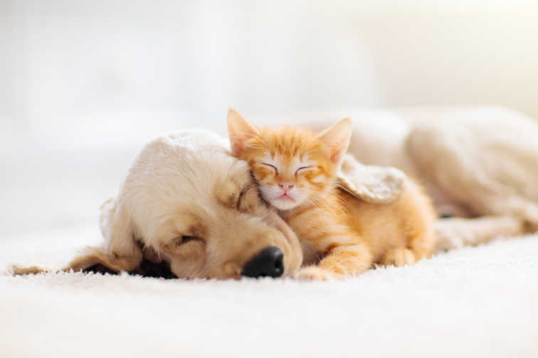 Take A Break From The Crazy With These Cute Kittens And Puppies