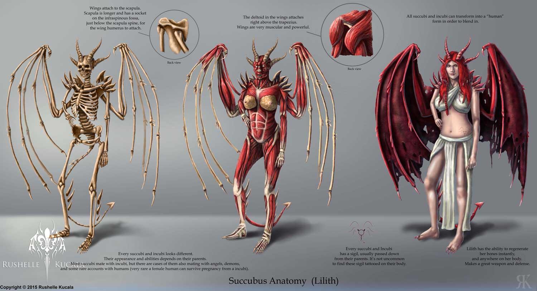 Rushelle Lilith Anatomy Study