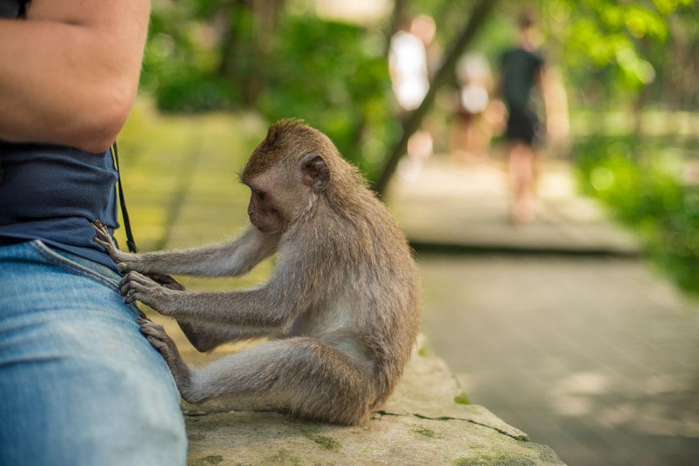 Monkey touching a person