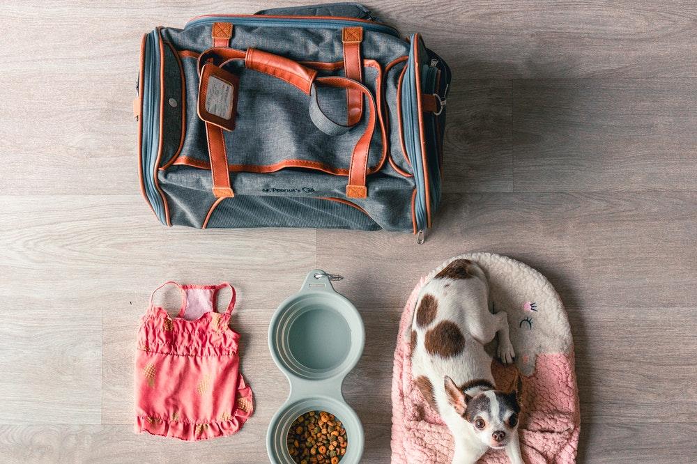 Dog lying next to a duffel bag