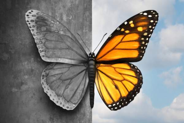 Butterfly half, black and white, and half color; bipolar concept.
