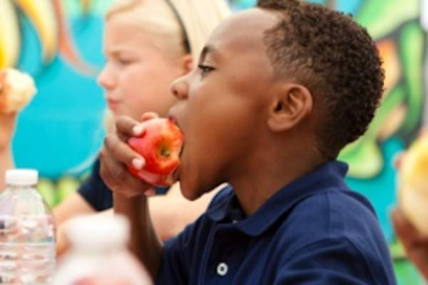 Young boy eating an apple at lunch in school.
