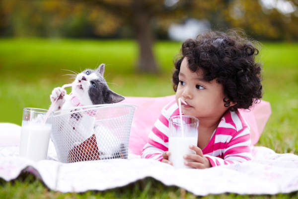 Adorable child drinking milk with kitten.