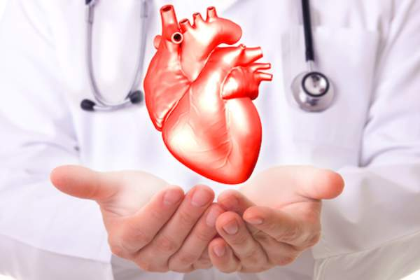doctor holding heart image