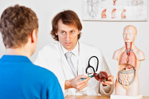 Doctor showing patient a liver model