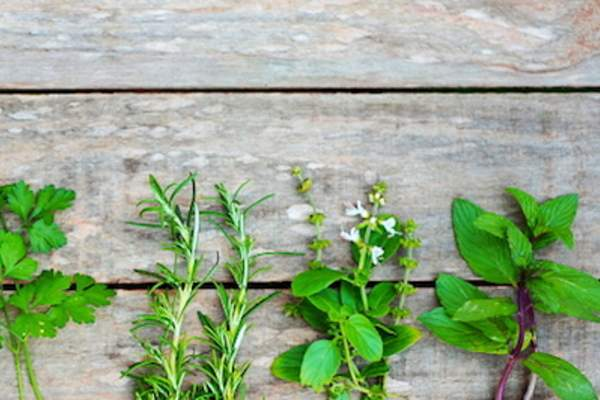Herbs can flavor food while helping reduce bad breath.