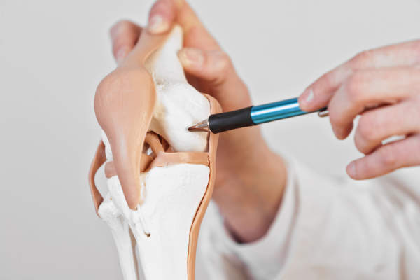 cartilage in knee