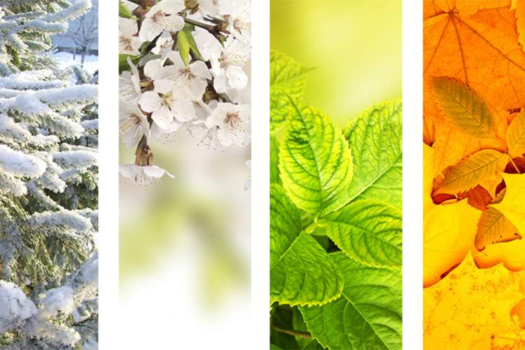 Foliage in four different seasons, winter, spring, summer, fall.