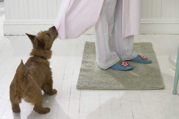 A dog pulling on a woman's robe.