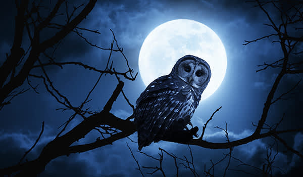 Owl perched on a branch at night with a full moon in the background.