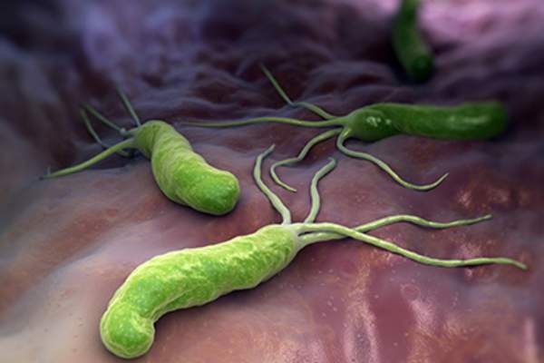 An illustration of helicobacter pylori