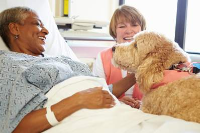 Woman in hospital after stroke with support dog.