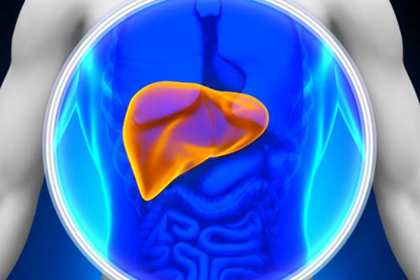 Torso illustration with liver highlighted.