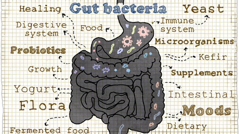 Gut bacteria graphic.