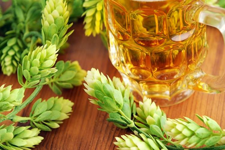 A glass of beer and fresh hops can help improve sleep.