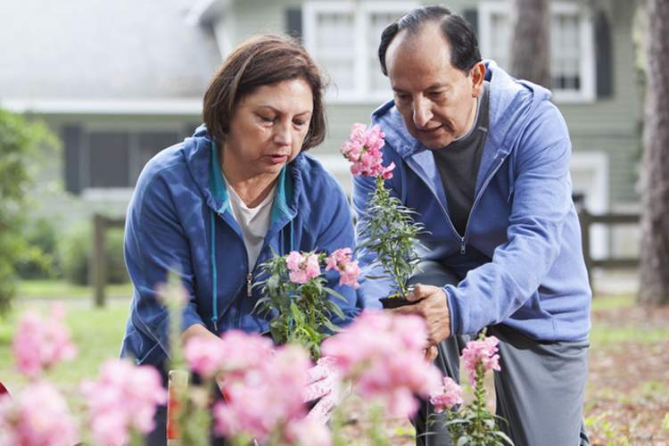 Senior Hispanic couple gardening together.