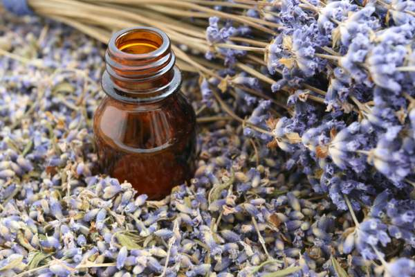 Lavender essential oils used for aromatherapy