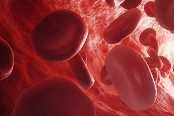 Red blood cells in the bloodstream.