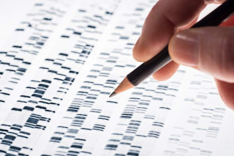 Person analyzing DNA test.