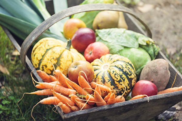 Fall harvest vegetables in a wooden box.