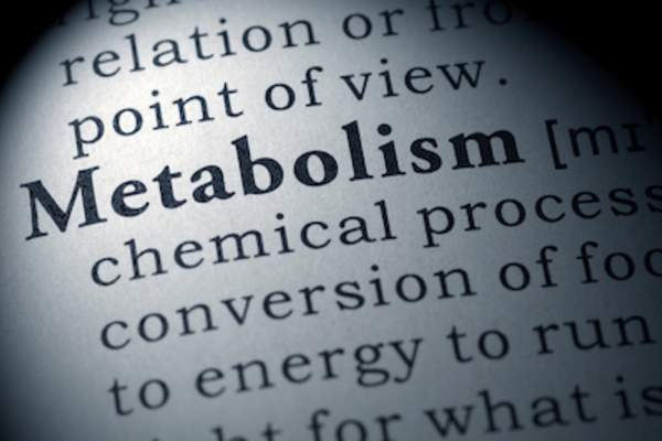Metabolism dictionary definition