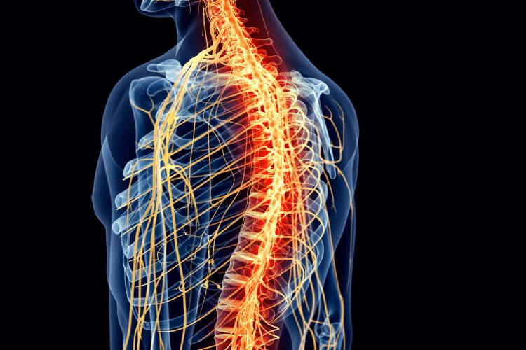 痛苦的脊柱