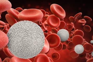 White blood cells amongst red.
