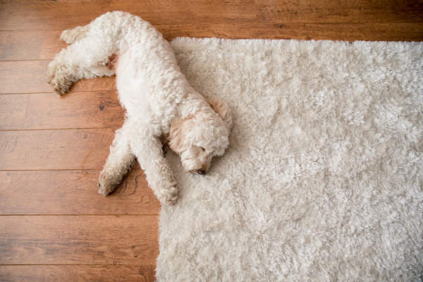 dog laying on area rug