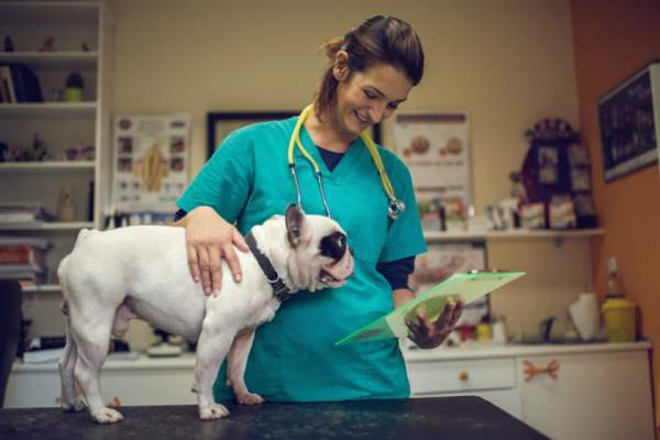 Happy veterinarian examining medical documents of a dog