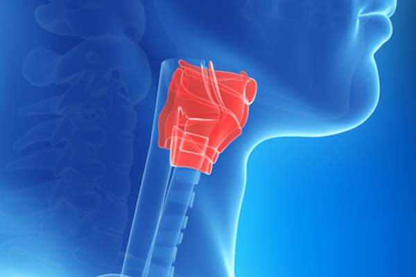 Image of larynx which can be harshly affected by acid reflux.
