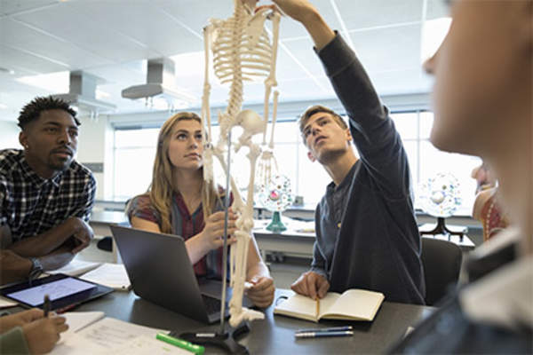Students examining a human skeleton in anatomy class.