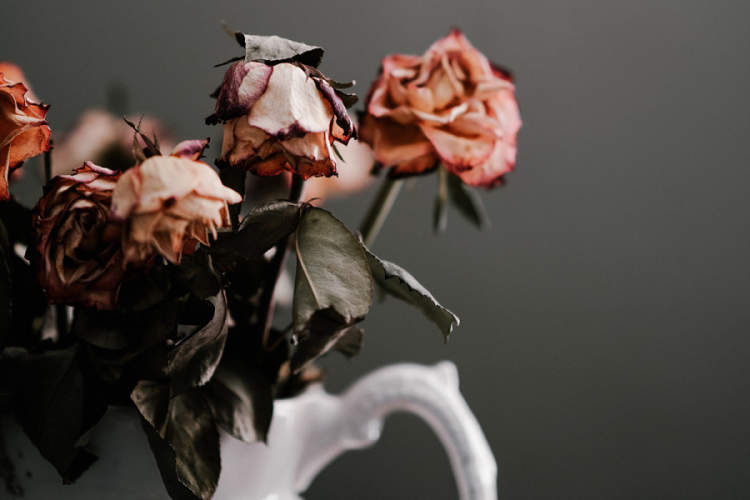 dying roses in vase
