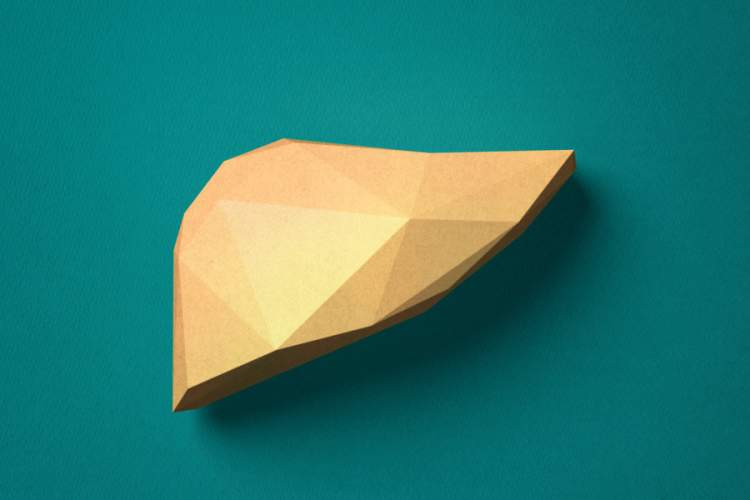 abstract gold paper model of liver