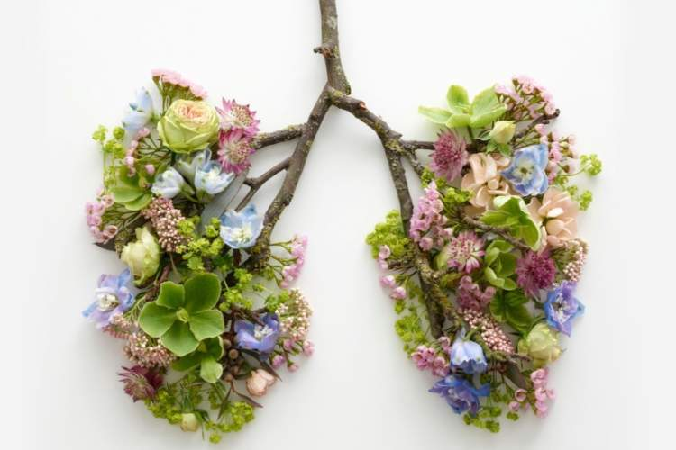 branches and flowers in the shape of lungs