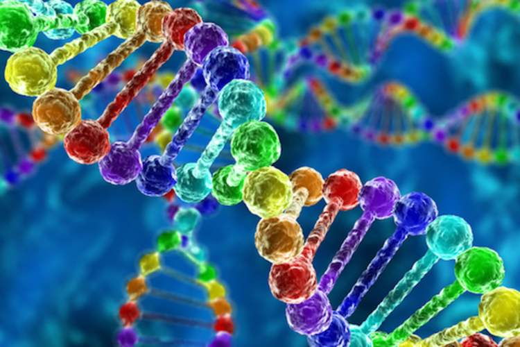 DNA double helix image.