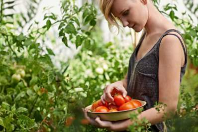 woman gardening and holding basket of tomatoes
