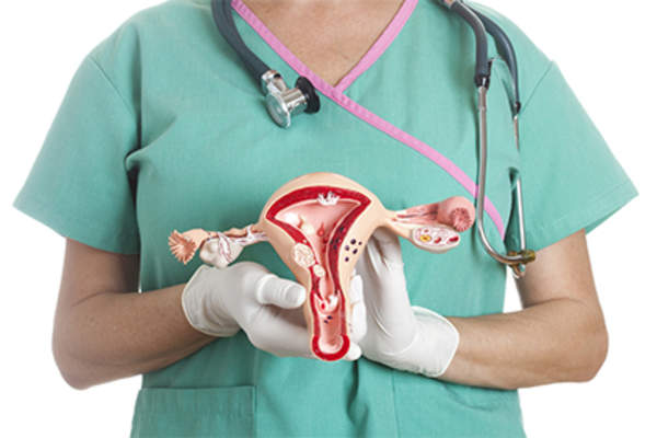 Nurse holding model of reproductive tract.