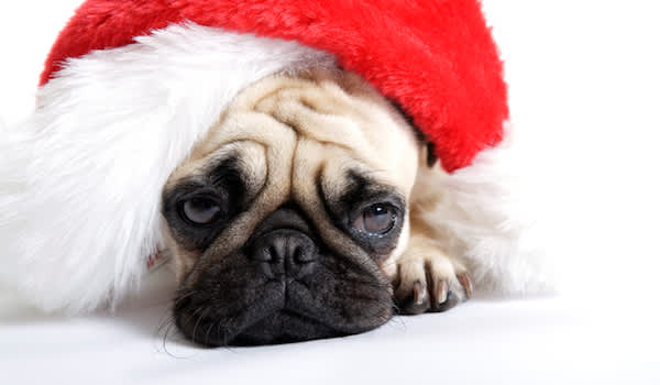 Sad dog in santa hat.