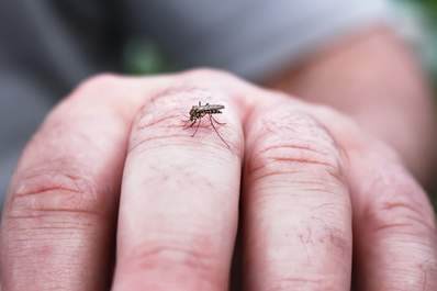 Mosquito on man's finger.
