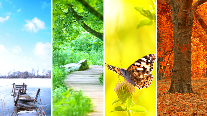 Four seasons collage.