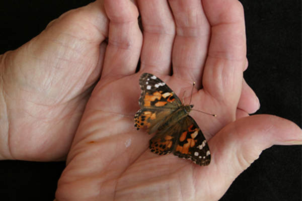 Hands holding a butterfly.