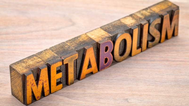 Metabolism written in carved wooden blocks.