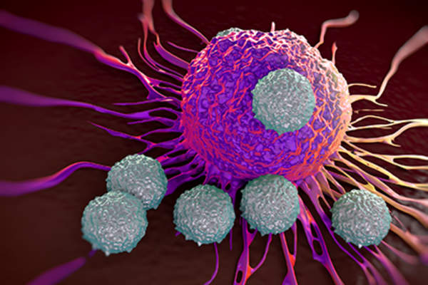 T-cells fighting cancer cell after immunotherapy treatment.