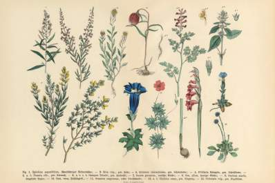 Drawing of medicinal herbs and flowers.